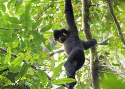 Jahoo Gibbon Camp